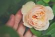 কবি ফিরোজ আখতার -এর একটি কবিতা 'নির্লিপ্ততা'